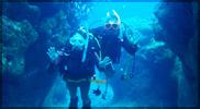 宮古島ダイビングOPENGATE(オープンゲート)/体験ダイビング